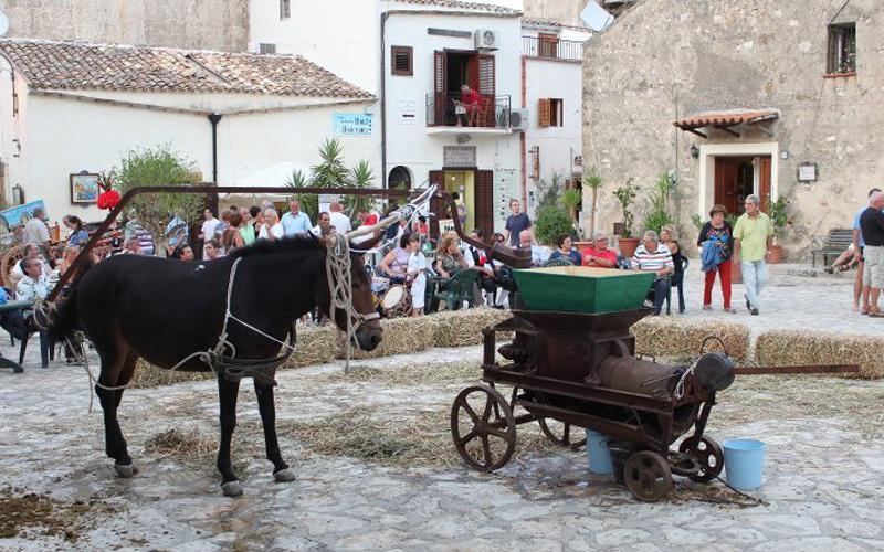 Harvest in the Square - Scopello